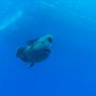 近付いてくる巨大な魚
