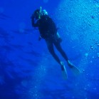 海の生き物に見とれて