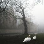 霧が似合う風景