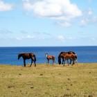 馬が多い島