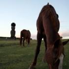 馬とモアイ