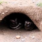 仲良いペンギン夫婦