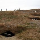 穴を掘って巣を作ります