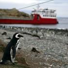 さすらいの波止場ペンギン