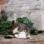 ローマのネコ