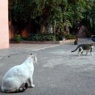 マラケシュのネコ2