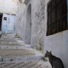 モロッコにもネコが多い