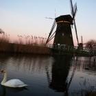 白鳥と風車