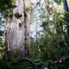 マオリ語で森の父