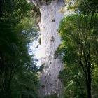 マオリ語で森の神