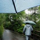 テ・プイアではずっと激しい雨