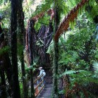 ジャングルあり、
