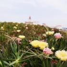 周辺は可愛らしいお花でいっぱい