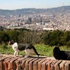 仲良い2匹のネコに遭遇