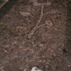 花模様の石畳