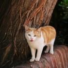 アルハンブラのネコ