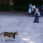 ネコが普通に歩いています