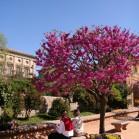 ピンク色の花が満開