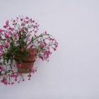 17番地のお花