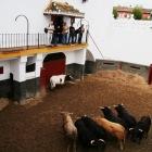 闘牛の前日にはトロたちが見られます