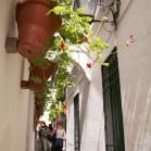 花の小道Calleja de las Flores