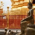 猿と象もお祈り