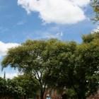 アユタヤーの雲