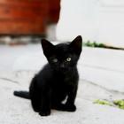 まっくろな子猫