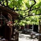 サフランボルにはブドウの木が多い