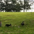 黒鳥ファミリー