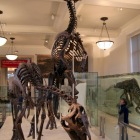 ナイトミュージアムに出演した恐竜