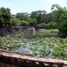 トゥドゥック帝廟の蓮池